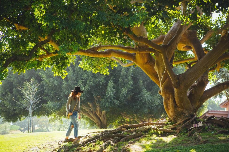 Establishing Roots